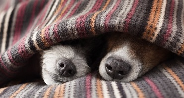 telepathy-with-animals_OMTimes_bigstock-Couple-Of-Dogs-73591723.jpgsmall